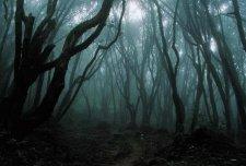 Dark-forest (tumblr.com)