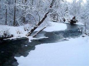 Tajga zimą (fot. http://taigatots.blogspot.com/2010/11/winter-wonderland.html)